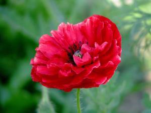 Keely's flower
