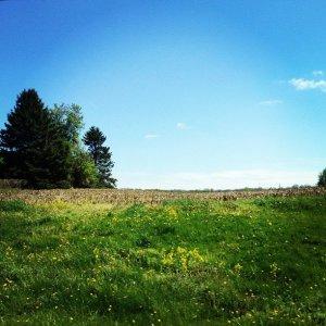 field - Keely