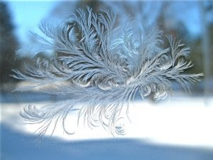 Picture of ice on our window by our daughter Keely.