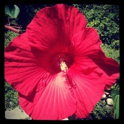 Flower at NMC
