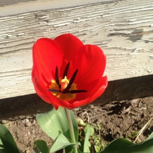 Spring Flower 2013 Lauren
