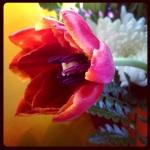 Beautiful flower Keely 2013