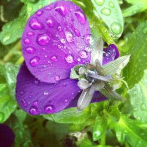 purple flower - Keely 2013