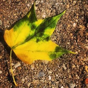 leaf 2 Lauren AUG 2013
