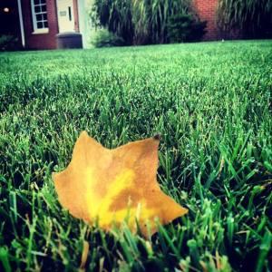 leaf AUG 2013 Lauren