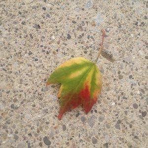 leaf AUG 2013