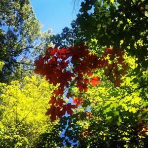 Fall in MI OCT 2013