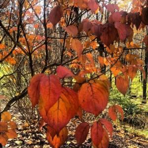 autumn pictures NOV2013