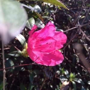 Louisana Flower 2014