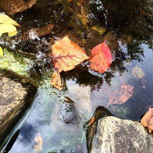 autumn leaves - lauren OCT 2014