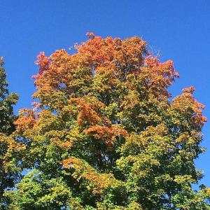 autumn tree NV 2014